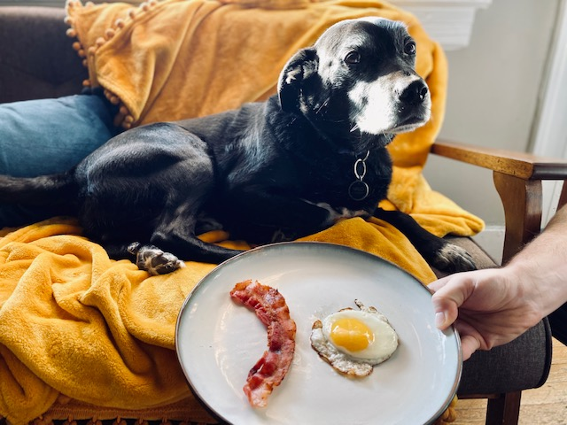 Dog on couch with eggs and bacon on plate